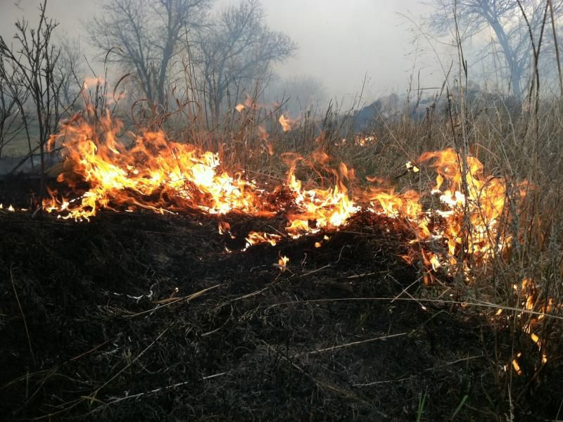 Burning Brome Grass